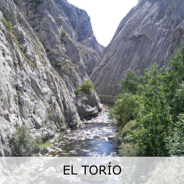 EL TORIO